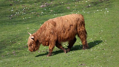 Get to Know: The Scottish Highland