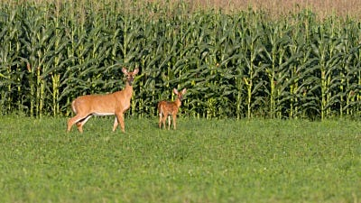 Deer fencing – ElectroBraid® Passes USDA Wildlife Test