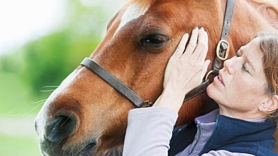Equine Massage: Help for Your Horse