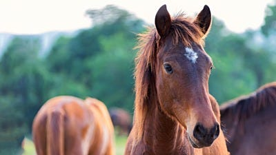 Fence Training: Introducing Horses to Electric Fencing