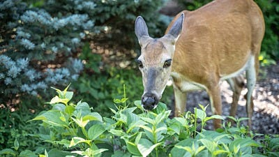 Garden Fencing: Keep Rabbits, Squirrels and Other Animals Away