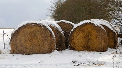 Hay! Is Your Hay Prepped to Survive Winter?