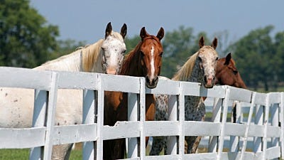 Horse Fencing Cost & Pricing Comparisons