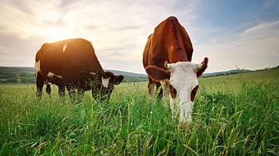 Save Time and Money with Strip Grazing