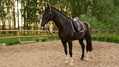 What to Consider About Horse Ownership before Saddling Up