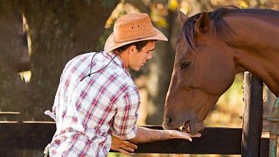Why Do Horses Need Polytape Fences?