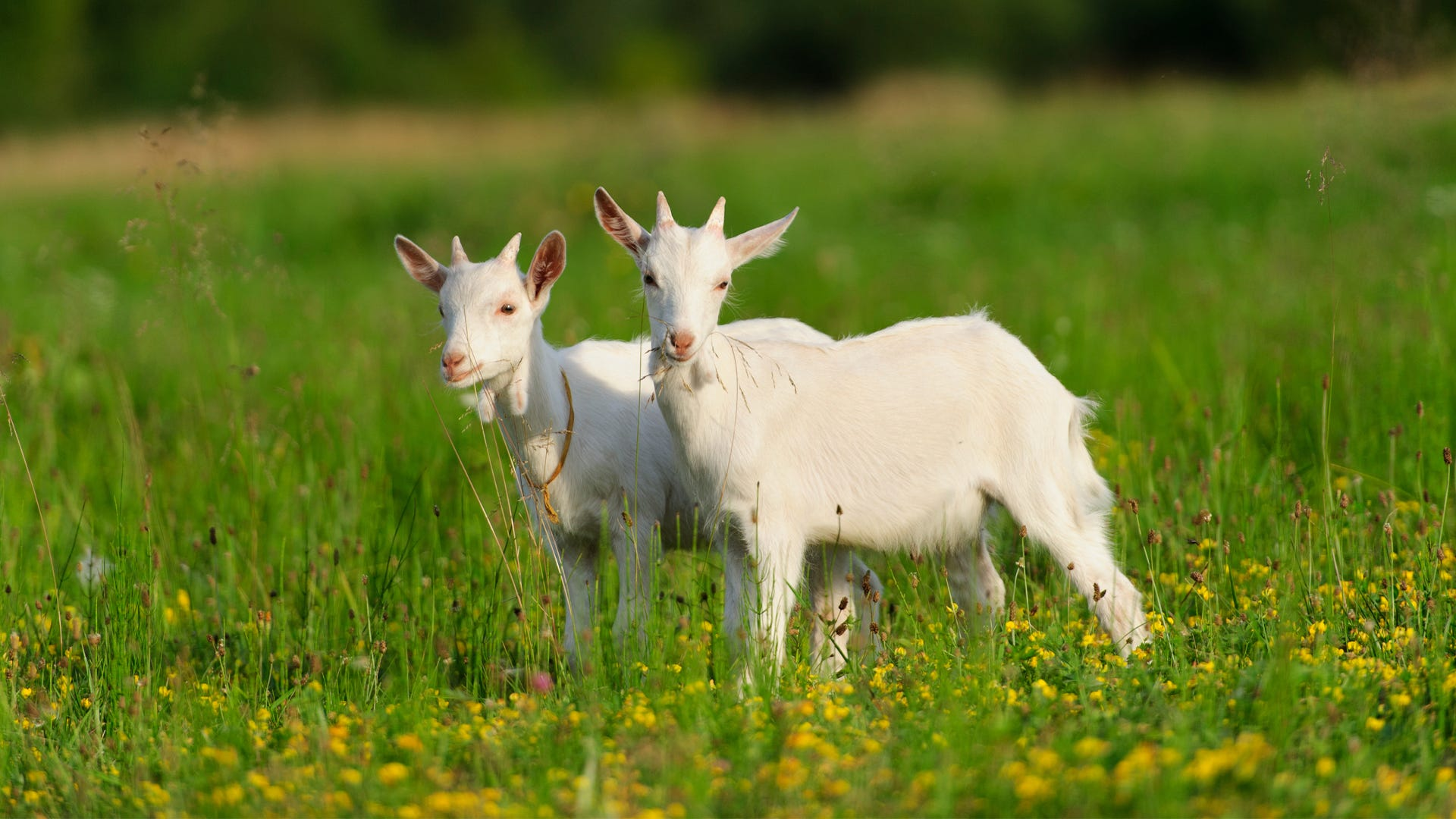 5 Most Profitable Animals for Small Farms