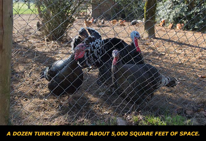 Get to Know the Turkey