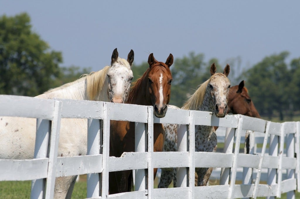 Post and Rail Horse Fence