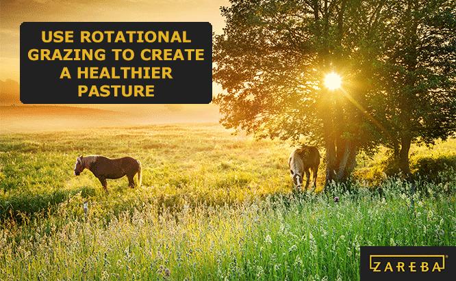 rotational grazing ideas