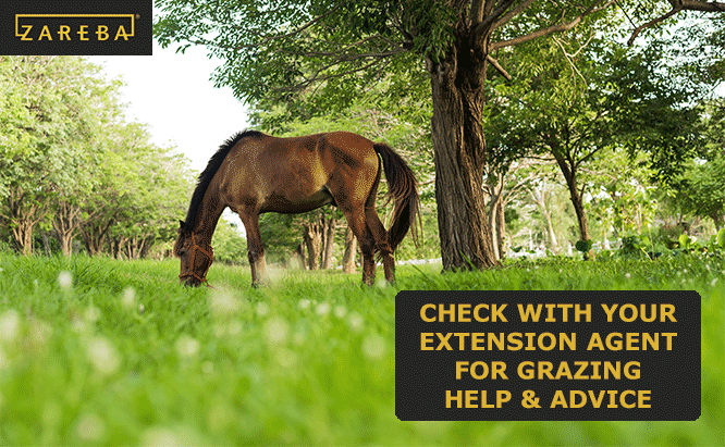 how to use rotational grazing for horses
