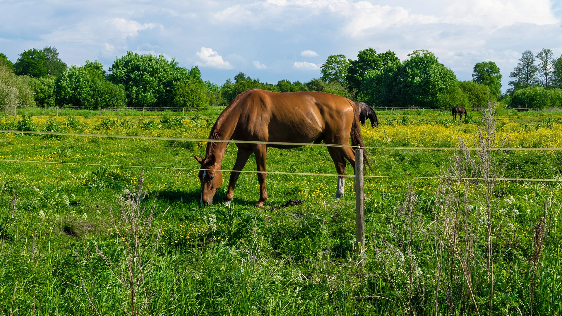 Electric Fence Planning 101: 8 Things to Do Before Electric Fence Installation