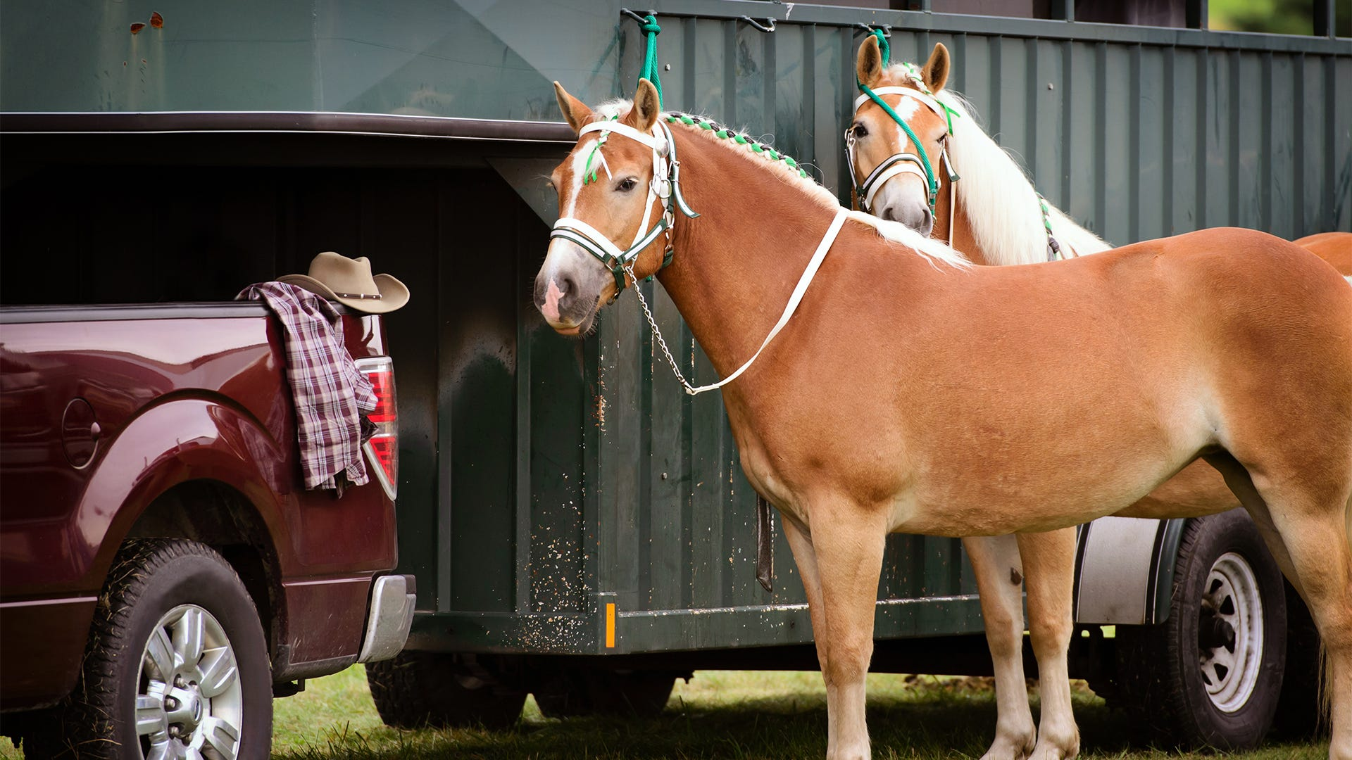 Get Your Horses and Fencing Ready For Spring