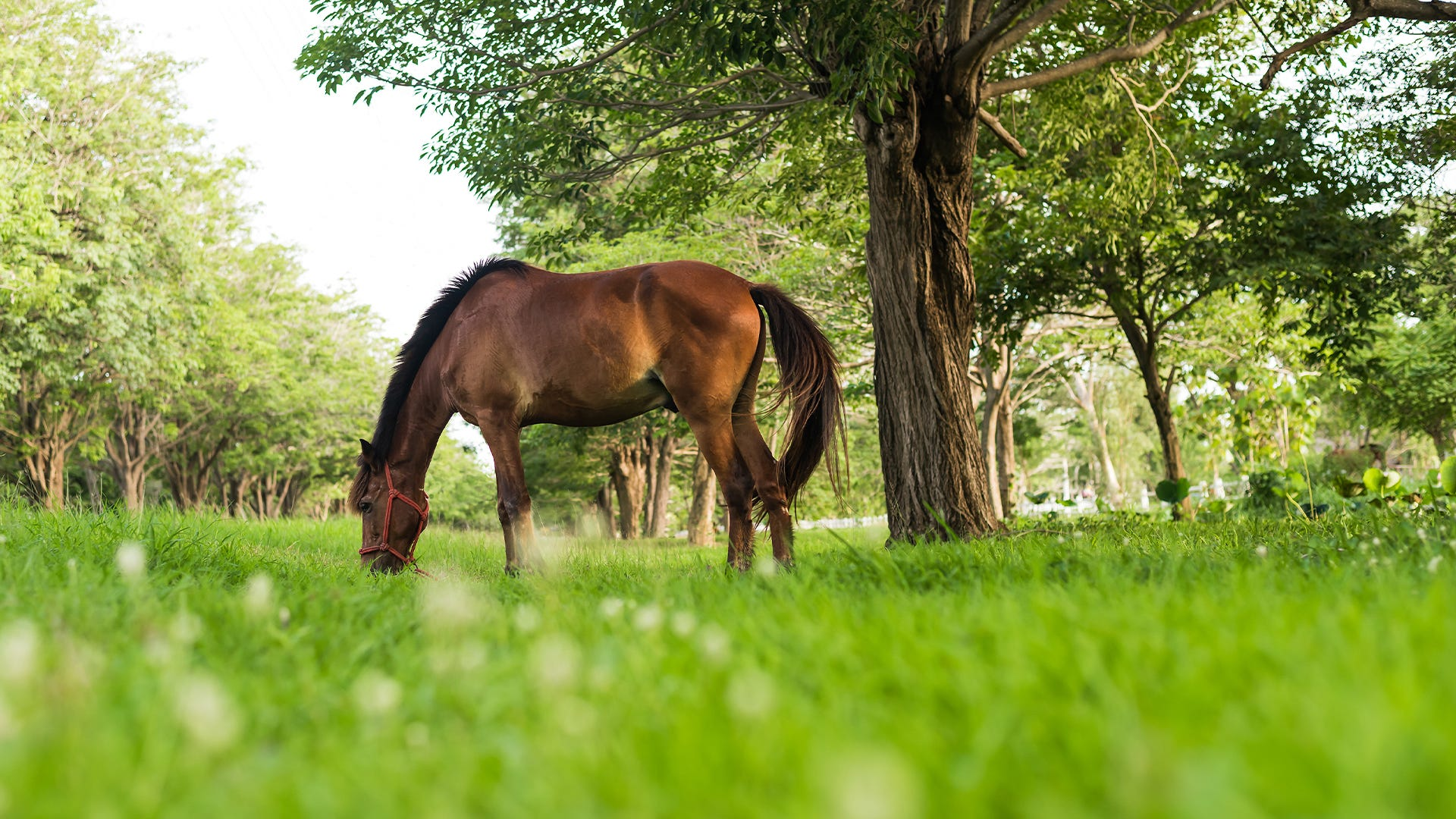 Improve horse pastures with rotational grazing