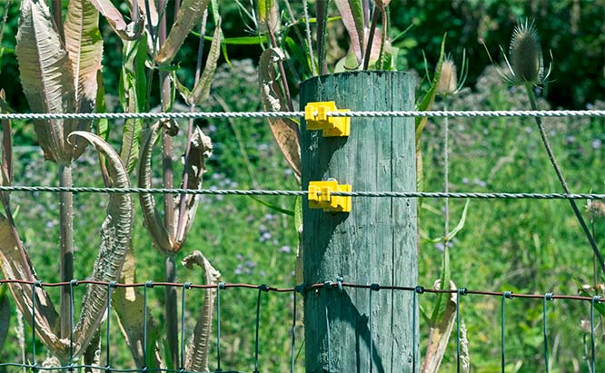 Why Weeds Hurt Electric Fencing