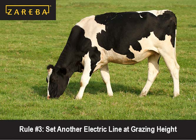 Electric Fence Lessons